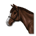 Cavallo di R. Livingston.png